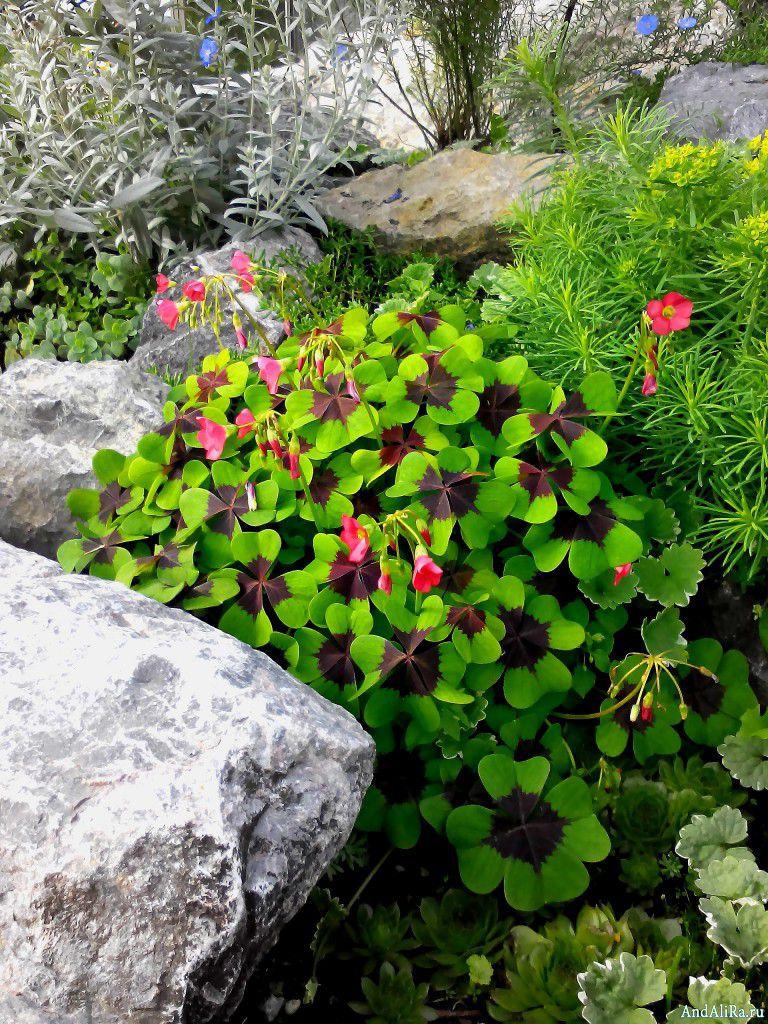 234Почвопокровные садовые цветы