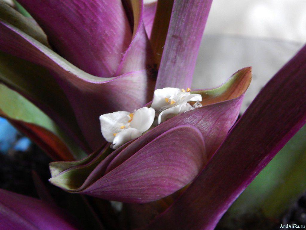 Грунт для орхидей флорика