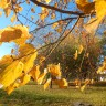 Осень!_An autumn is gold